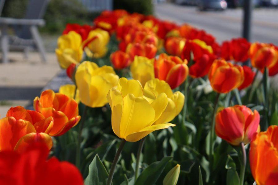 Spring in CalCo