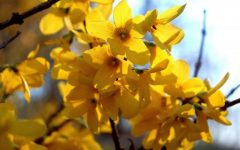Out and About: Spring in CalCo